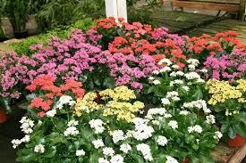 Pin em Tipos de Flores